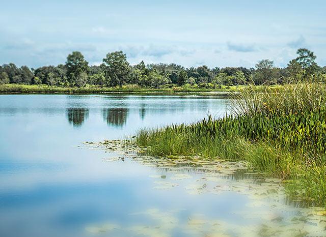 Lake County, FL | Real Florida. Real close.